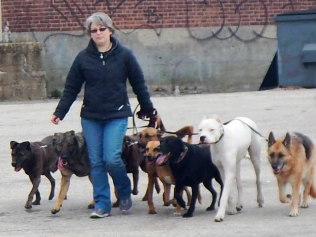 Michelle walking eight dogs